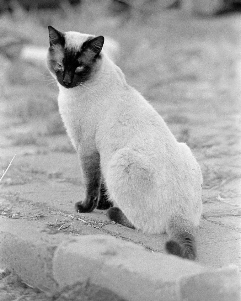 "Bad Eyed Kitty  <br /> <br /> This is a first of a few photos from the same experimental roll. I shot BW400CN at an EI of 50. I then developed the roll in a R09 ""New"" 1+50 solution for 6 minutes(1 minute constant agitation followed by one inversion every 30 seconds). I'm pretty happy with the results considering this is my 5th roll of film that i have ever developed."