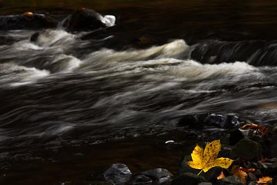 Žlutá Kanada v Českém Švýcarsku / Yellow Canada in Czech Switzerland