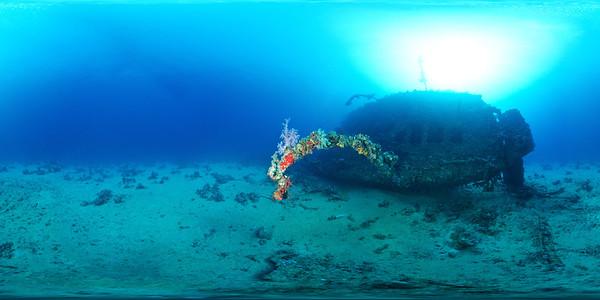 Carnatic coral