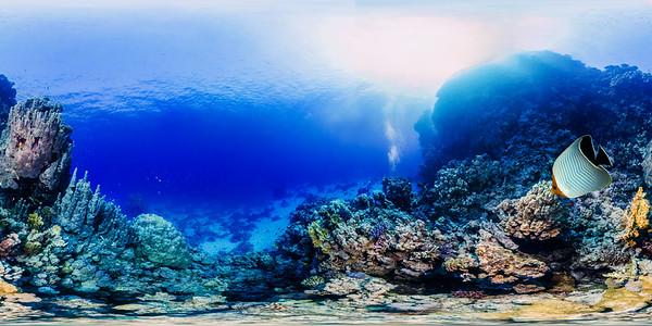 Dangerous reef02