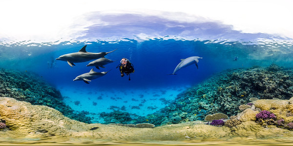 dolphin house 1_sphere ok