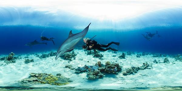 Dolphin reef 5 ok