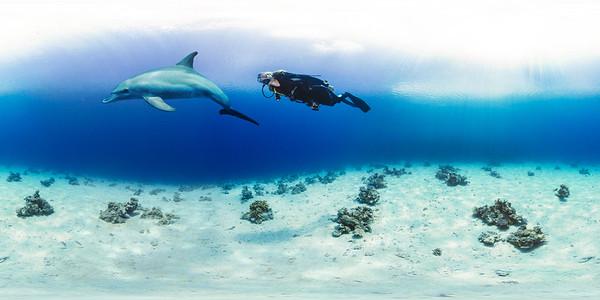 Dolphin reef 3 opk