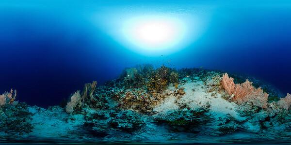 Gorgonia Reef 5