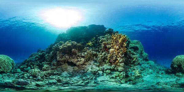 Gorgonia Reef 13