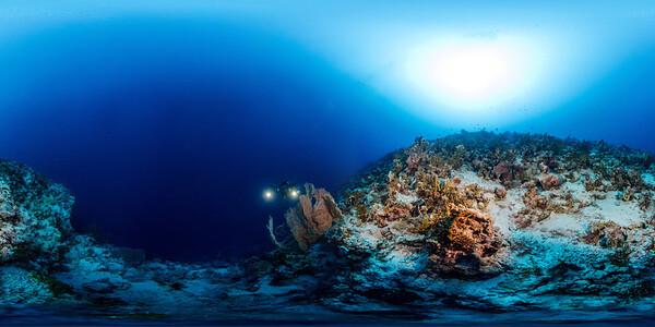 Gorgonia Reef 4