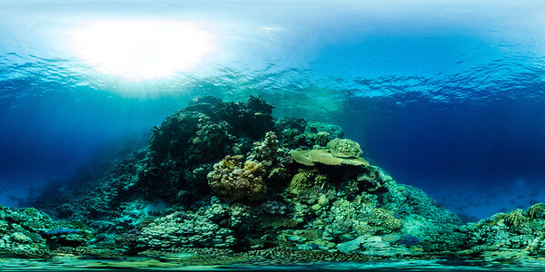 Gorgonia Reef 17