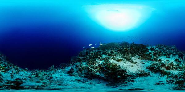 Gorgonia Reef 6