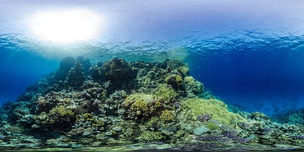 Gorgonia Reef 15