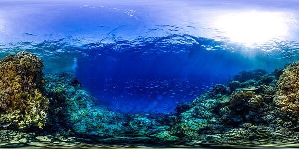 Gorgonia Reef 19