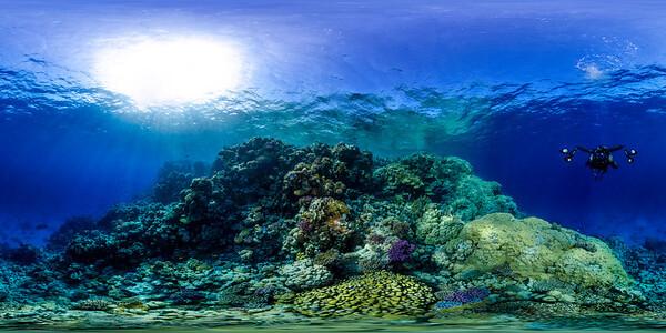 Gorgonia Reef 23