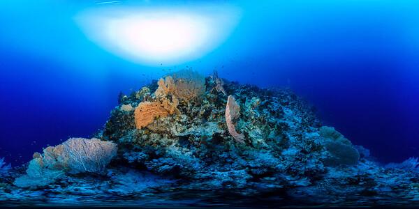 Gorgonia Reef 7_1