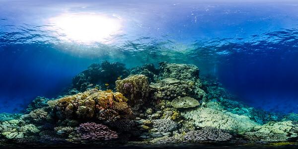 Gorgonia Reef 16