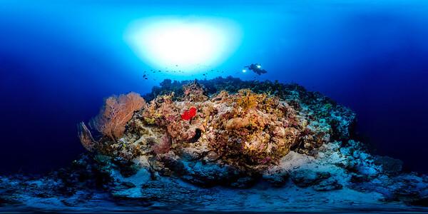 Gorgonia Reef 3