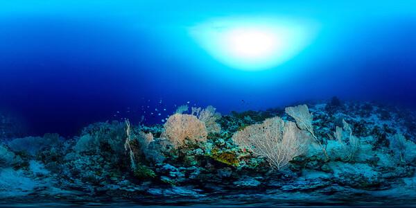 Gorgonia Reef 11