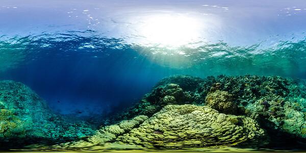 Gorgonia Reef 22