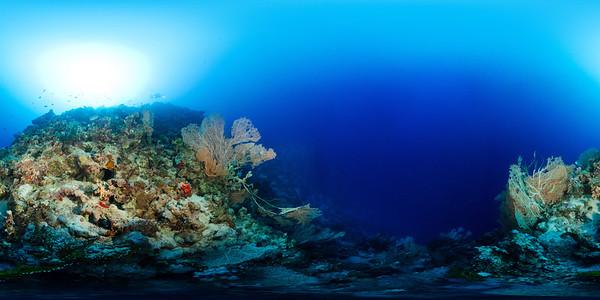 Gorgonia Reef 1