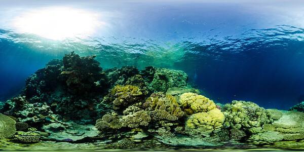 Gorgonia Reef 18