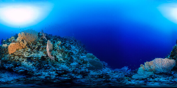 Gorgonia Reef 7