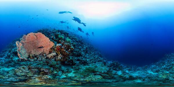 Jackson reef 01
