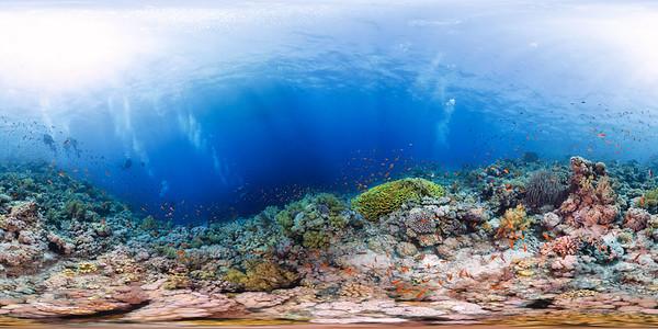 Jackson reef 04