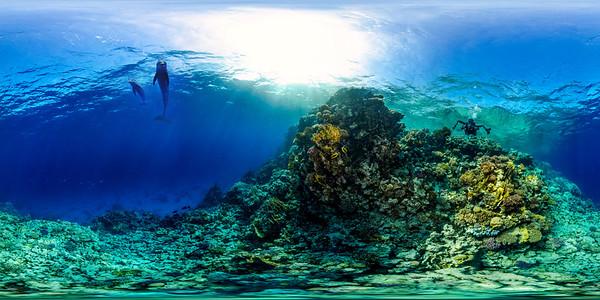 Gorgonia Reef