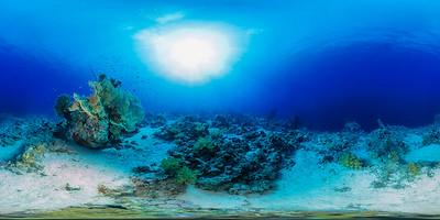 sheraton reef 01