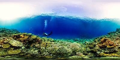 Turtle Bay 13