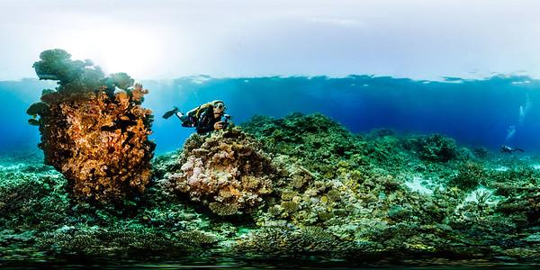 Turtle Bay 7