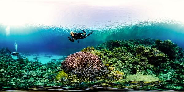 Turtle Bay 12
