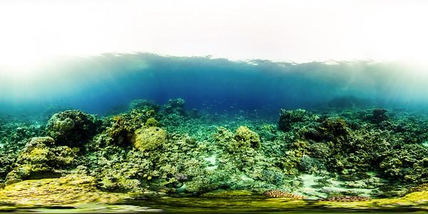 Turtle Bay 9