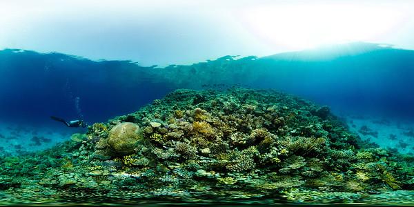 Turtle Bay 5