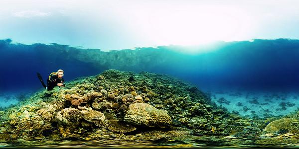 Turtle Bay 6