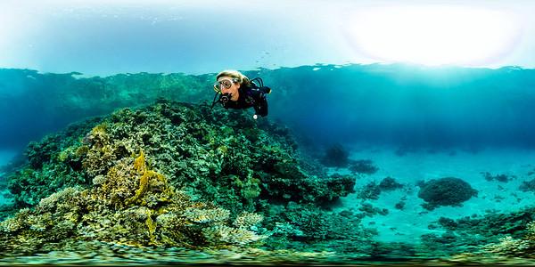 Turtle Bay 1