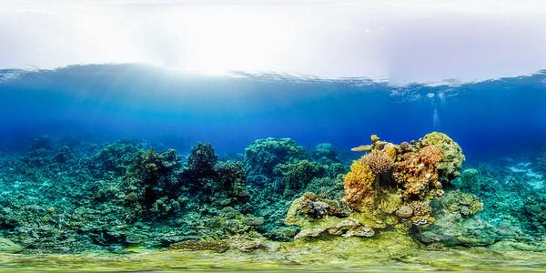 Turtle Bay 10