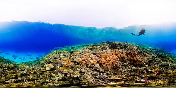 Turtle Bay 3