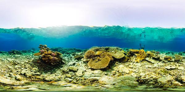 Turtle Bay 2