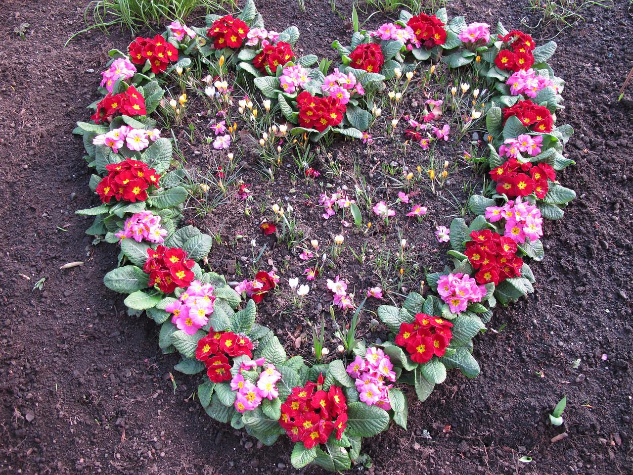 Flower heart.<br /> <br /> Victoria, BC.