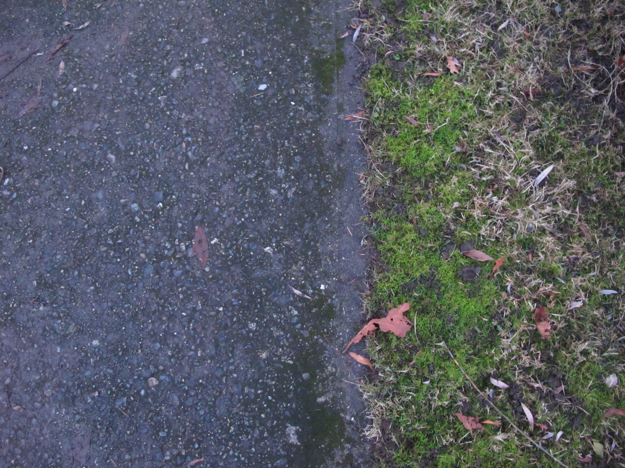 It's a bright line between pavement and moss.<br /> <br /> Victoria, BC.