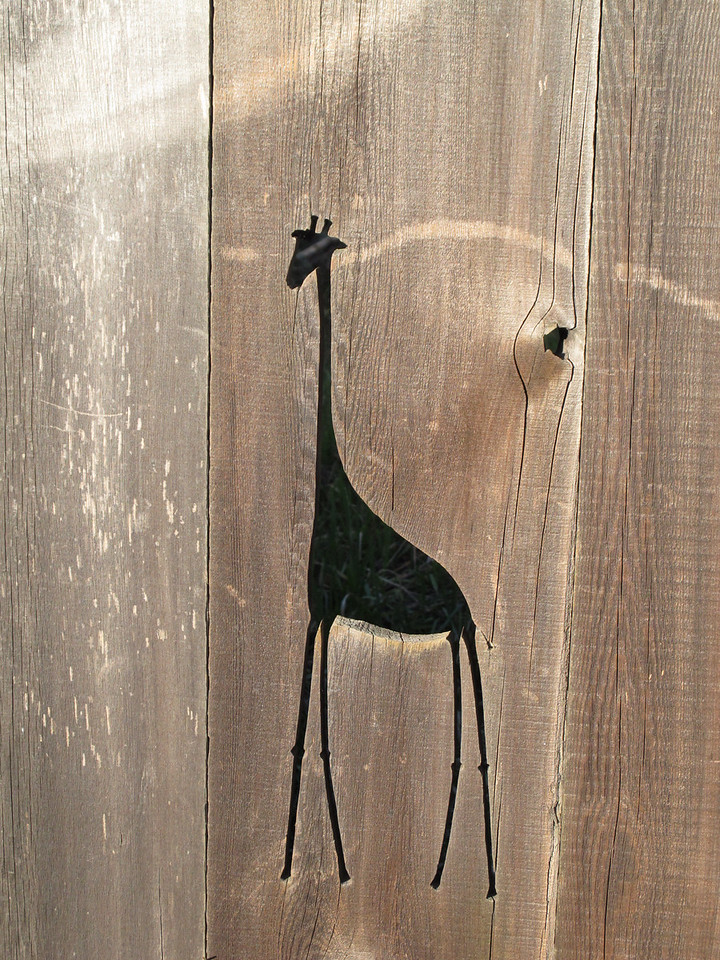 Giraffe!  <br /> <br /> Victoria, BC.