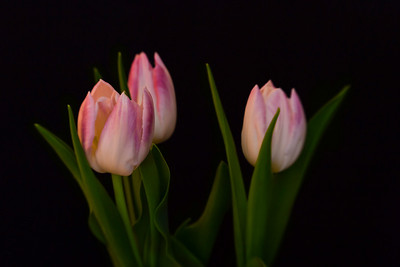 121 | three tulips