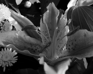 360   flowers