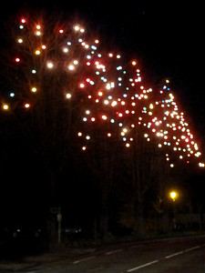 344   Christmas Trees
