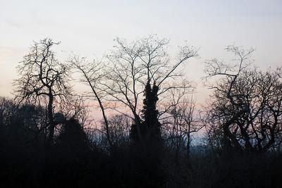 338   dawn