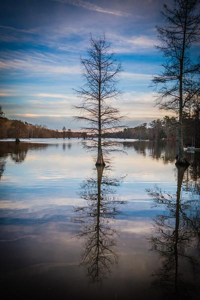 The Lone Tree - January 6
