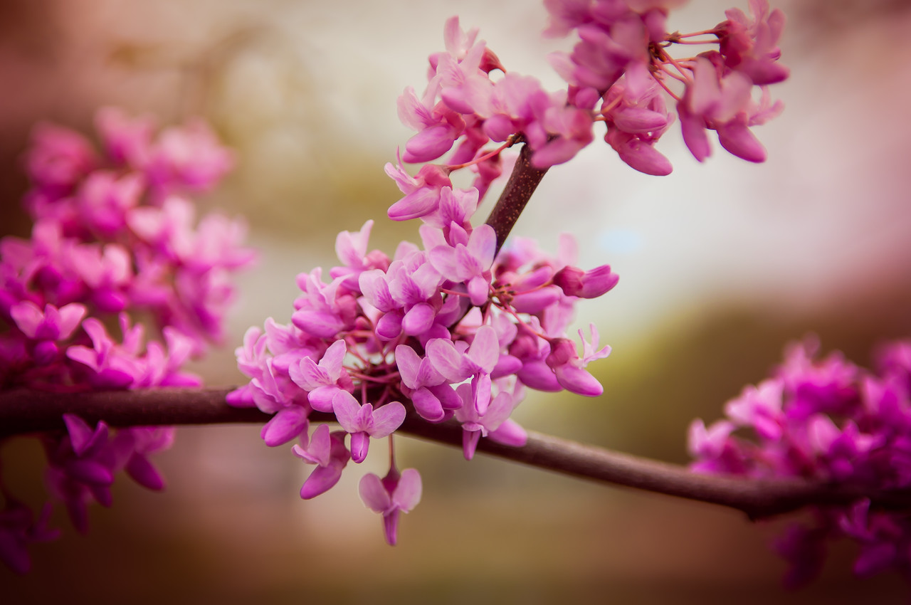 Spring Time and Change - April 14