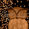 Owl and Stars 018 / 365