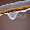 Frozen Willow Tree 009 / 365