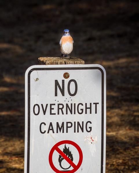 Guard Bluebird
