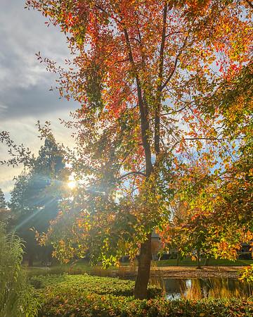 That autumn light